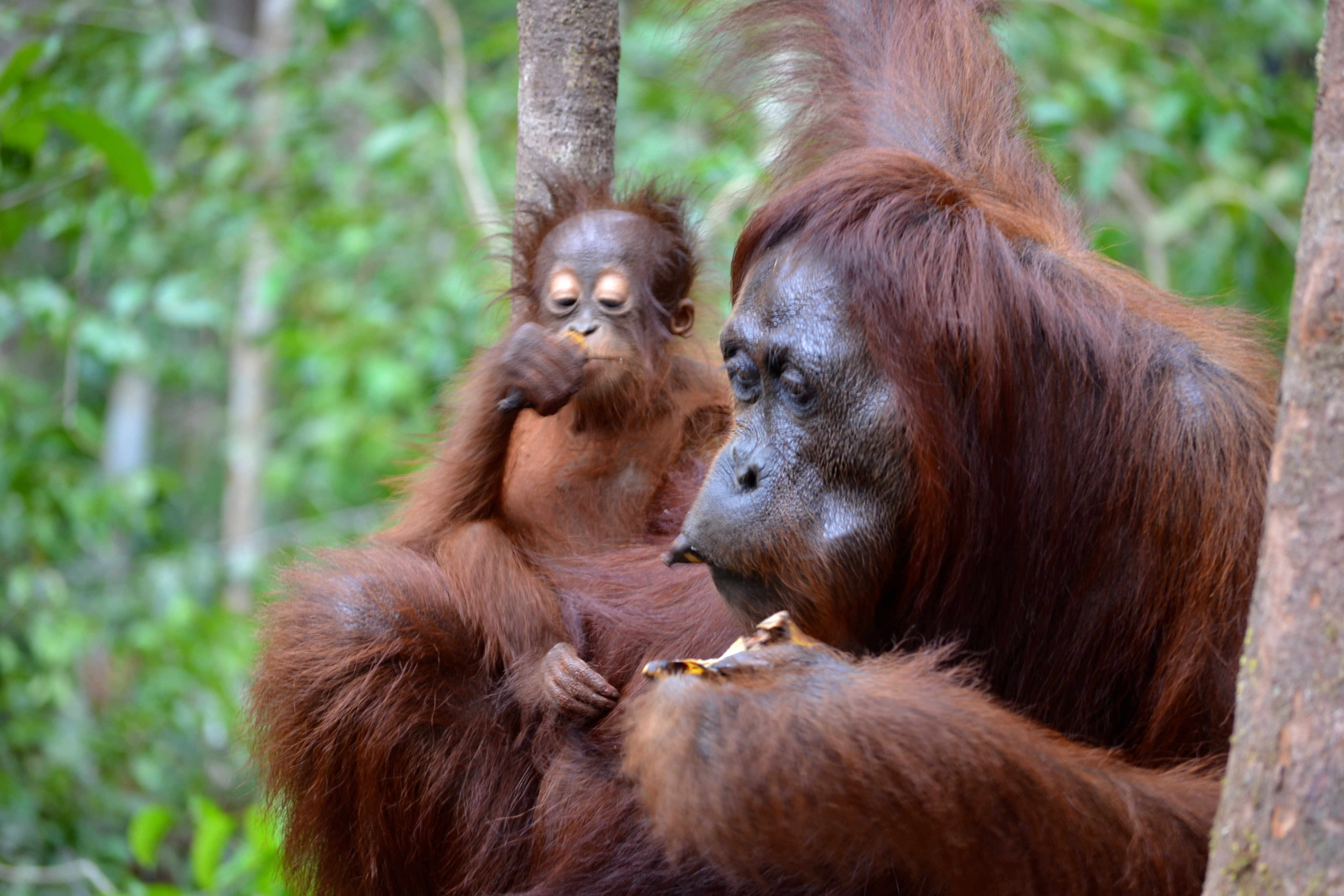 The gallery for --> Types Of Primates